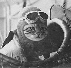 Hans, the cat of the Third Reich ready to fly and fight against The Allies.