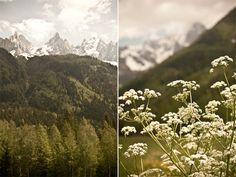 I am an age old tree. I am stars in white snow.: chamonix : down in the valley