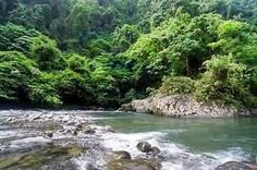 34- Herança da floresta tropical de Sumatra - Indonésia