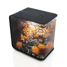 Amazon.com : biOrb FLOW 30 Aquarium with LED Light - 8 Gallon, Black : Aquariums : Pet Supplies