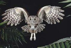 #OWLS#