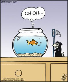 I died, excuse the pun when I found this last Halloween.a Grim Reaper fish! Funny Puns, Funny Cartoons, Hilarious, Funny Stuff, Cute Comics, Funny Comics, Hot Weather Humor, Grim Reaper, Twisted Humor