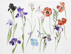 elizabeth blackadder. water colours . simple yet interesting.