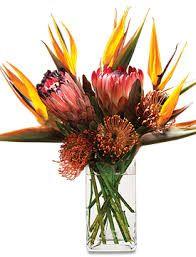 bird of paradise flower decorations - Google zoeken