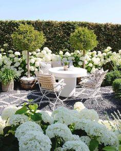 White Gardens, Farm Gardens, Outdoor Gardens, Hydrangea Landscaping, Outdoor Landscaping, Minnesota Landscaping, Amazing Gardens, Beautiful Gardens, Beech Hedge