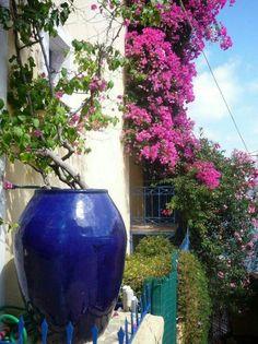 Blue pot and flowery balcony in Assos, Kefalonia