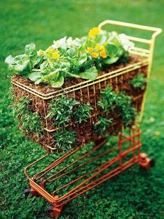 Repurposed shopping trolley Aaahh love it!! I can move it when necessary #uniquegardeningideas