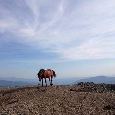 Stolovi is a mountain located in central Serbia, southwest of Kraljevo, between the rivers Ibar, Ribnica and Brezanska. | Столови су планина која се налази југозападно од Краљева, између Ибра, Рибнице и Брезанске реке. | Photo: @anarozasr