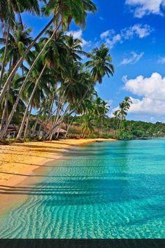 Palm Trees...on a beach anywhere...make you feel like you were there.
