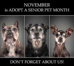 November is Adopt a Senior Month