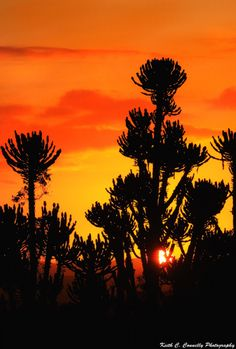 Eastern Cape Sunset