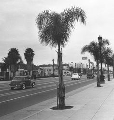 This is the 8800 block of Wilshire Boulevard near Robertson Boulevard in 1940, photographed by Ansel Adams. Those infant palm trees are now four stories high, and Wilshire probably hasn't been that empty since before World War II.