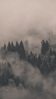 Fog-Mist-Forest-Morning-iPhone-Wallpaper - iPhone Wallpapers
