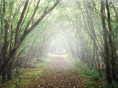 ▶ TrickyPhotoshop-How to Create Mist(Fog) using Photoshop CS6 - YouTube