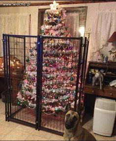 Taki fajny Świąteczny szkodnik