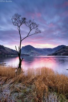 Sunrise at the lone tree on Buttermere