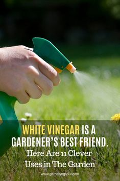 Vinegar has myriads of uses in the kitchen, but it can also do miracles in the garden! Look at these 11 amazing vinegar uses to know more. garden tools White Vinegar Is A Gardener's Best Friend. Here Are 11 Clever Uses in The Garden Organic Vegetables, Growing Vegetables, Regrow Vegetables, Growing Plants, Garden Pests, Garden Tools, Garden Insects, Garden Fertilizers, Garden Bugs