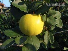 Dulový lekvár - recept | Varecha.sk Dula, Food And Drink, Fruit, Vegetables, Drinks, Drinking, Beverages, The Fruit, Vegetable Recipes