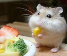 Hamster Benodigdheden kopen? Vergelijk nu 19 webshops | Thuisvergelijken.nl