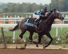"""Spectacular Bid, Kentucky Derby and Preakness winner of 1979 and Horse of the Year in 1980.  He was called by his trainer Bud Delp """"the greatest horse ever to look through a bridle"""" and missed winning the Triple Crown when he finished 3rd in the Belmont behind Coastal.   He may have been a disappointment to some, but this beautiful horse had my heart."""
