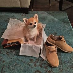 Adorable pup   Relaxed Fit: Sorino - Oveno   Shop here: https://www.skechers.com/en-us/style/64427/relaxed-fit-sorino-oveno/brn