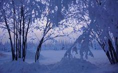 inverno, árvores, neve, natureza