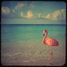 Flamingo art photo - 8x8 a stunning pink flamingo against a beach with beautiful turquoise ocean. Buy one get one free sale on Etsy, $30.00