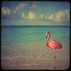 Flamingo Beach  4x4 photo avec un flamant rose par elgarboart, $6.00