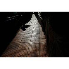 Emptiness #skantzman #athens #manolisskantzakis #photography #colpur #bird #pigeon #ricohgr #28mm