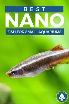 Tiny Fish, O Fish, Small Fish, White Cloud Minnow, Neon Tetra, Nitrogen Cycle, Tropical Freshwater Fish, Nano Tank, Fish Care
