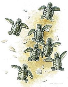 """would get a baby sea turtle for my dad since his nickname for me when I was little was """"Turtle"""" ❤ Tattoos Bein, Foot Tattoos, Cute Tattoos, Sleeve Tattoos, Tatoos, Baby Sea Turtles, Sea Turtle Art, Turtle Love, Turtle Tattoo Designs"""