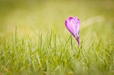 Frühlingsboten ...