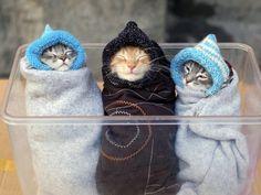 Kotek dzieci, trzy małe śmieszne koty wektor
