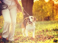 Let the dog take me on more walks.