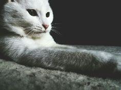 My cat :3