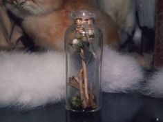 The Curio Vial is filled with:  Dried flowers  Bird bones Rat bones muss  Curio vial sealed with light pink color wax.  Due the glass reflection, pictures can't show how pretty it is. This glass jar has been filled with collected species that I have found in nature. None of the animals w...