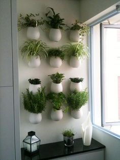 herbs on the kitchen wall