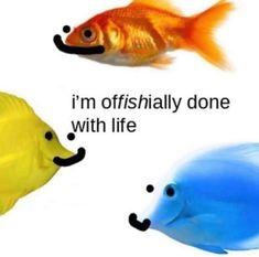 i remember when i liked eating fish sticks - rip memesdaily cleanmemesdaily dailymemes meme memes pg cleanmemes cleanmeme dankmeme dankmemes hahaha oof All Meme, Love Memes, Stupid Funny Memes, Funny Relatable Memes, Haha Funny, Bruh Meme, Memes Supongamos, Response Memes, Current Mood Meme