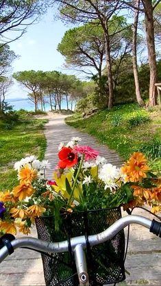 Radha Krishna Photo, Krishna Photos, Super Video, Good Morning Beautiful Images, Nature Photography, Awesome, Outdoor Decor, Flowers, Plants
