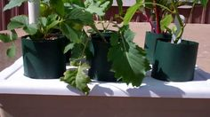 The Amazing  Self Watering Pop Bottle Garden Is Going Crazy! Check It Out!
