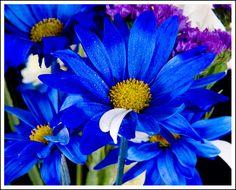 Flowers by tsaraleksi.deviantart.com on @deviantART