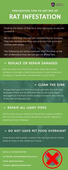 How To Get Rid, How To Remove, Rat Infestation, Getting Rid Of Rats, Pest Control, Brisbane, Infographic, Channel, Website
