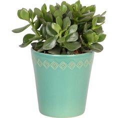 """Mix sukulentov """"Tana"""" v dekoratívnej keramike priemer kvetináča cca 12 cm"""