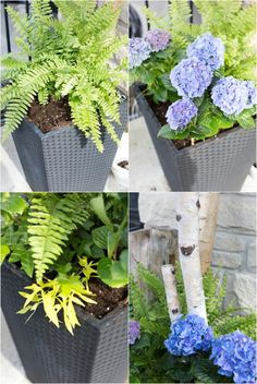 Front Porch Planters – front yard ideas with porch Fern Planters, Outdoor Planters, Flower Planters, Flower Pots, Hanging Planters, Outdoor Gardens, Front Porch Plants, Front Porch Flowers, Front Door Planters