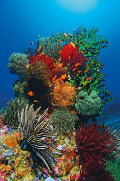 Inexpensive diving holiday: top destinations for bargain hunters – Hobby Sports World Coral Reef Art, Coral Reef Aquarium, Coral Reefs, Ocean Art, Ocean Life, Underwater Wallpaper, Beautiful Sea Creatures, Underwater Life, Ocean Creatures