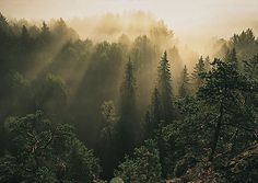 nuuksio national park - Google Search