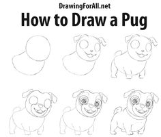 how to draw a baby pug step by step