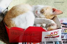 """Finger Lickin' Good!""  KFC's newest menu. Meow!"