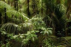Tropical jungle forest Natur via MuralsYourWay.com