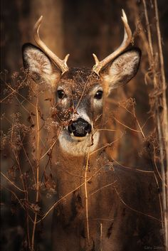 deer in the fall